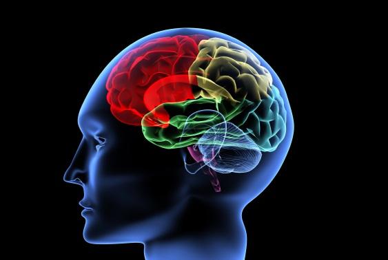 Обнаружена спецзона в мозге, которая отвечает за старение тела