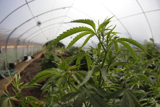 В штате Вашингтон узаконили хранение марихуаны