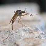 Спасаемся от комаров репеллентами