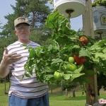 Садоводство лечит от депрессии