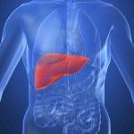 ТОП-4 мифов о болезнях печени