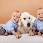 Собаки защищают детей от атопического дерматита