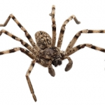 Яд паука: как избежать гибели