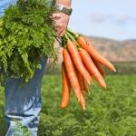 Мужчинам надо есть морковь