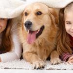 Собака-лекарь: российские практики
