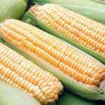 Кукуруза улучшит зрение