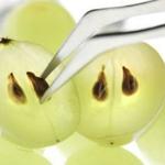 Онкобольным: показаны виноградные косточки