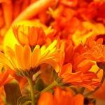 Лечитесь оранжевым цветом