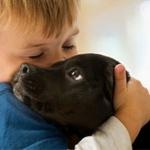 Как собака сможет помочь в общении с ребенком