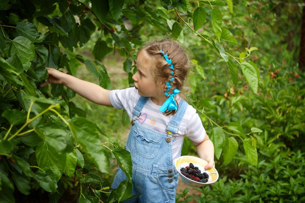 Дети любят шелковицу