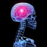 Как и когда формируется структура мозга ребенка