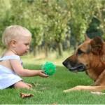 Что должны знать дети и родители об укусах собак