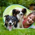 Значение домашних животных для развития ребенка