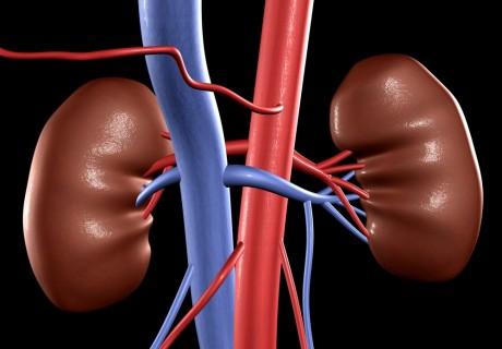 Болезни мочеполовой системы:Гломерулонефрит