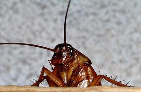 Если в доме тараканы