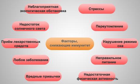 factory_imun