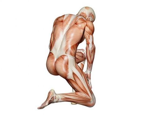 Мышц – у человека – примерно 700