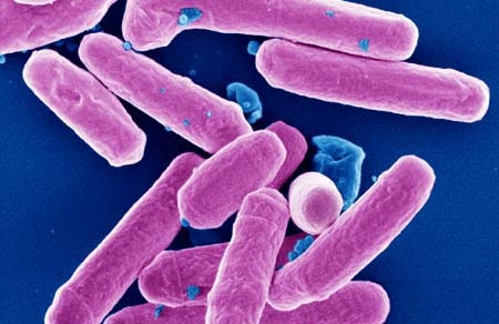 Инфекционные и паразитные заболевания