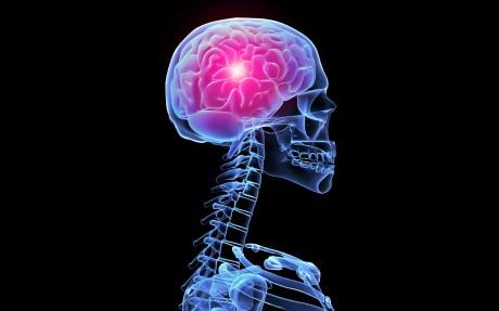 Формирования мозга