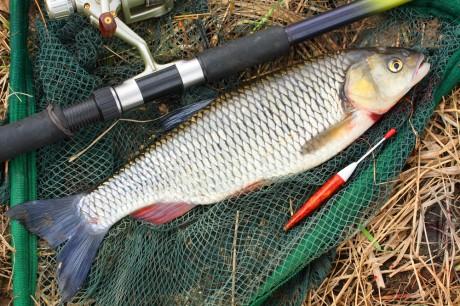 А что нужно – для рыбалки?