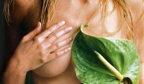 Мамология