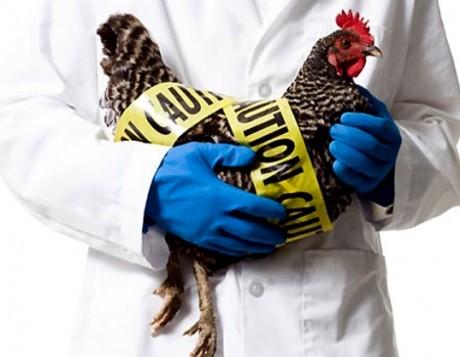 В Гонконге – вспышка птичьего гриппа