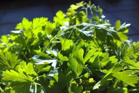 травы для снижения холестерина отзывы