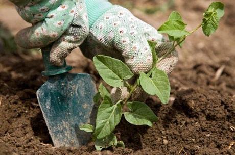 Чем полезно для здоровья садоводство