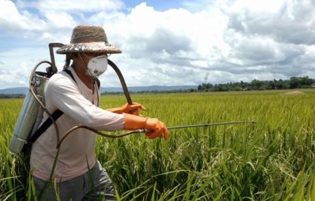 Чем вредны пестициды