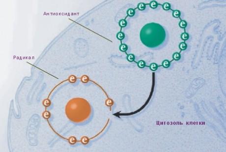 Механизм действия антиоксидантов