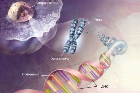 Зачем делают генетические тесты
