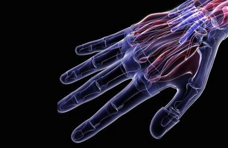 Как у людей могу регенерировать пальцы
