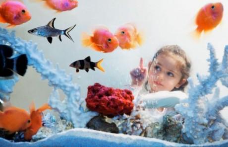 Лечение аквариумными рыбками