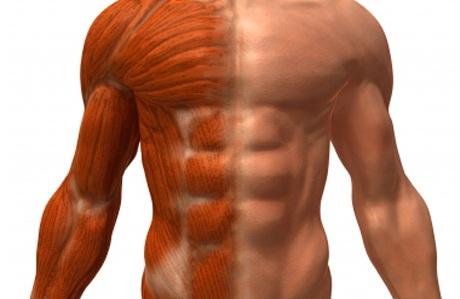 Новые упражнения для роста мускулов