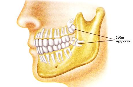 Роль зубов