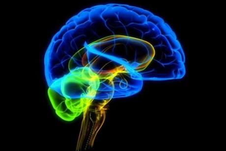 Правда ли, что человек использует только 10% своего мозга