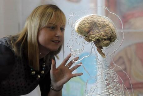 Правда ли, что у людей самый большой мозг