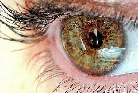 Как определить болезни организма по состоянию глаз