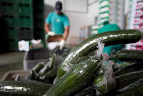 Азия – основной поставщик зараженных продуктов