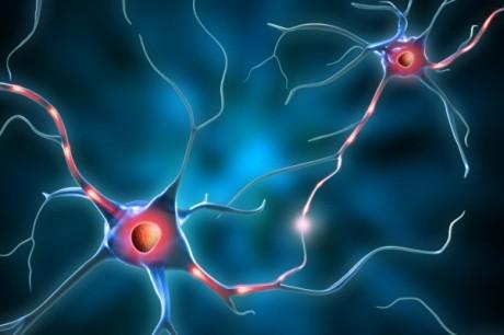 Ученые вырастили печень из стволовых клеток