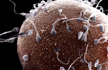 Сперматозоиды пребывают в неизменном движении