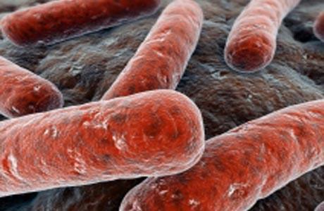Треть населения земного шара инфицирована микобактериями туберкулез