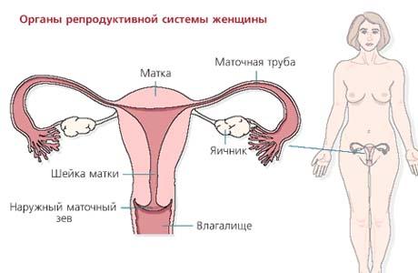 Фмолгия женского влагалища фото 15-247