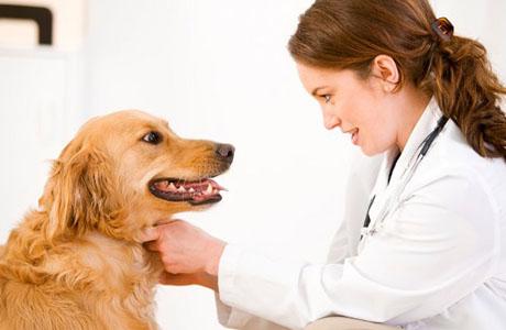 Собаки способы предсказывать припадки эпилепсии у детей
